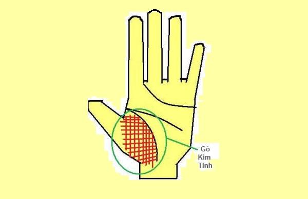 Những đường chỉ tay không nên có là đường vân dạng lưới ở gò kim tinh